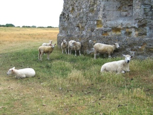 Castle sheep